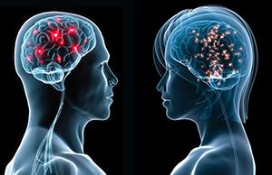 Чем женский мозг отличается от мужского ?